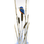 birds-fine-art-prints-kingfisher-bullrushes-suzanne-perry-art-015