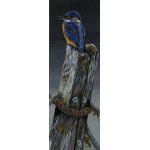 birds-fine-art-prints-kingfisher-night-light-suzanne-perry-art-5029