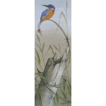 birds-fine-art-prints-kingfisher-tranquility-suzanne-perry-203
