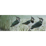 birds-fine-art-prints-lapwings-suzanne-perry-122_844786054