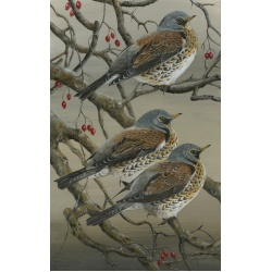 birds-fine-art-prints-fieldfares-autumn-jewels-suzanne-perry-art-208_87070547