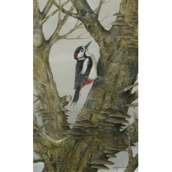 birds-fine-art-prints-great-spotted-woodpecker-heart-of-the-forest-suzanne-perry-art216