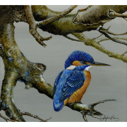 birds-fine-art-prints-kingfisher-breakfast-branch-suzanne-perry-art-253