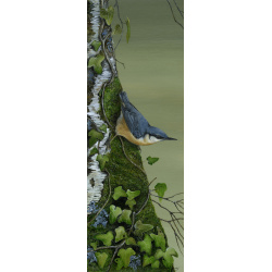 birds-fine-art-prints-nuthatch-mud-dabbler-suzanne-perry-art-273_166762228