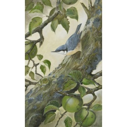 birds-fine-art-prints-nuthatch-pippin-suzanne-perry-art-193