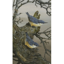 birds-fine-art-prints-nuthatches-double-take-suzanne-perry-art-210