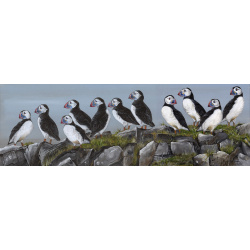 birds-fine-art-prints-puffins-clowns-of-the-coast-suzanne-perry-265art
