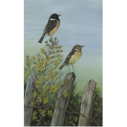 birds-fine-art-prints-stonechats-suzanne-perry-art-124_1482373602