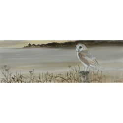 birds-of-prey-paintings-barn-owl-misty-morning-suzanne-perry-art-159