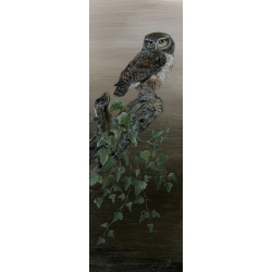 birds-of-prey-paintings-little-owl-breaking-dawn-suzanne-perry-art-115