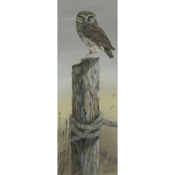 birds-of-prey-paintings-little-owl-early-bird-suzanne-perry-152