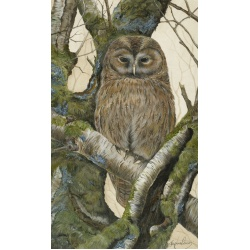 birds-of-prey-paintings-tawny-owl-hector-suzanne-perry-art-173
