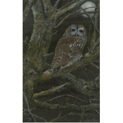 birds-of-prey-paintings-tawny-owl-lunar-suzanne-perry-art-207