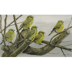 garden-birds-paintings-greenfinches-suzanne-perry-art-211