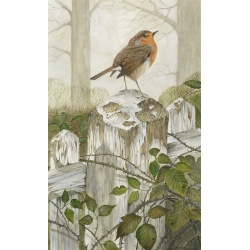 garden-birds-paintings-robin-bramble-suzanne-perry-art-200_1551846749