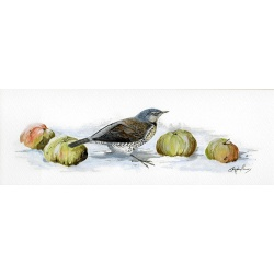 visiting-birds-paintings-fieldfare-with-apples-suzanne-perry-art