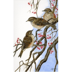 visiting-birds-paintings-redwings-threes-a-crowd-suzanne-perry-art-098