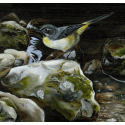 water-and-coastal-birds-paintings-grey-wagtail-suzanne-perry-art-252_579051128