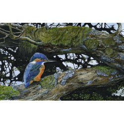 water-and-coastal-birds-paintings-kingfisher-reflection-suzanne-perry-art-299_1109426031